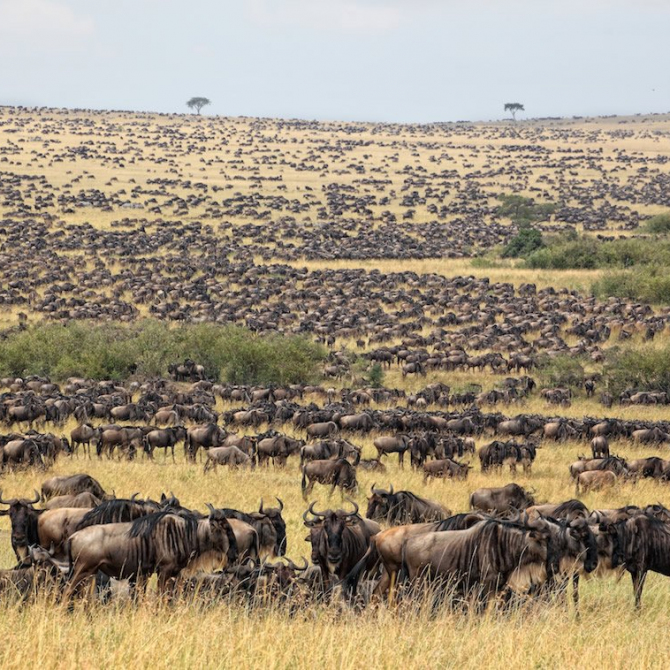 Kenya launches wildlife census to boost conservation of iconic species