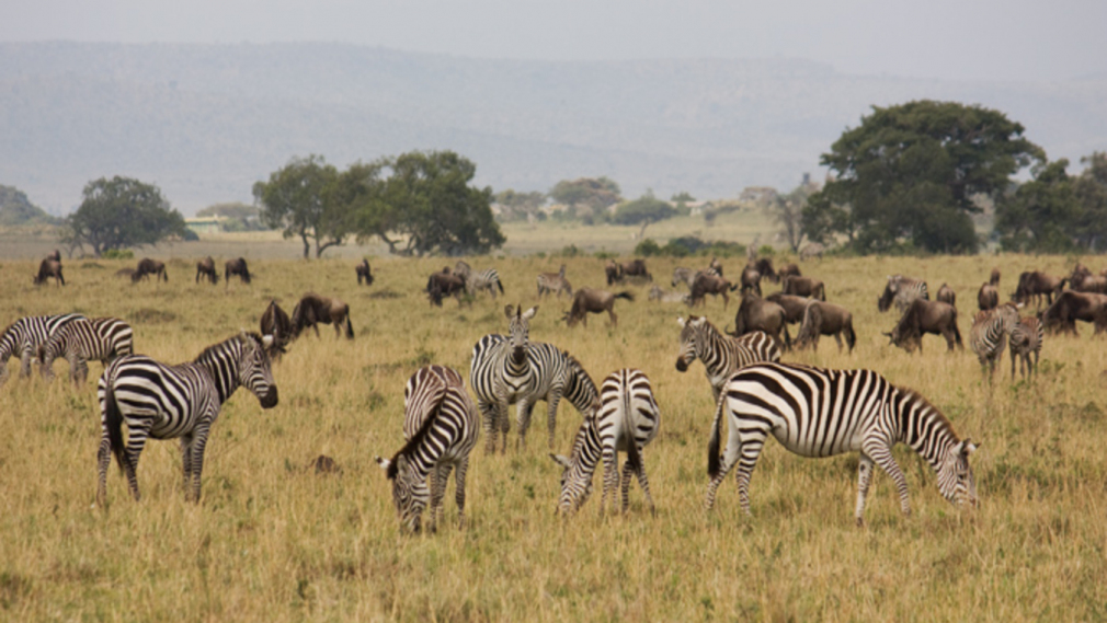 Kenya Reopens National Parks to Boost Tourism After Covid-19 Lockdown